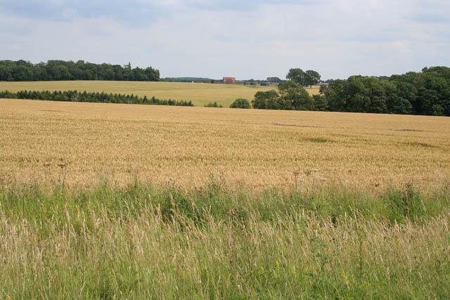 Farmland near Cranwell