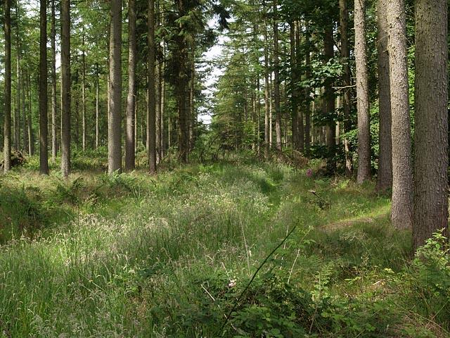 Footpath through Cloughton Woods