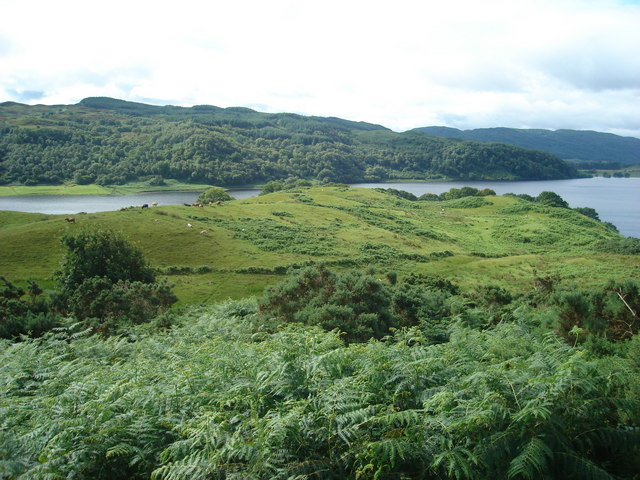 Rough grazing by Loch Nell
