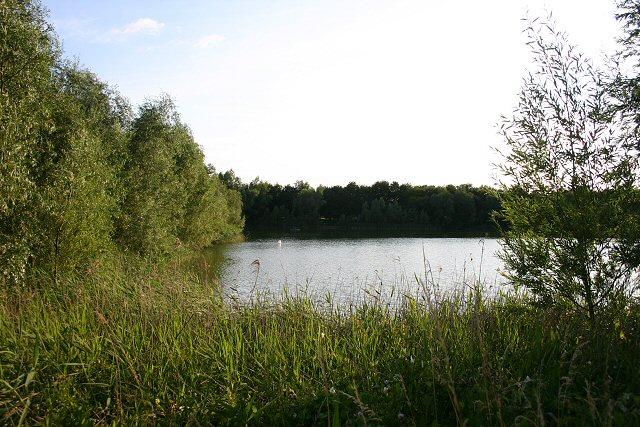 Pond at Isleham Fen