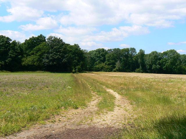 Humbers Wood, near Kings Somborne