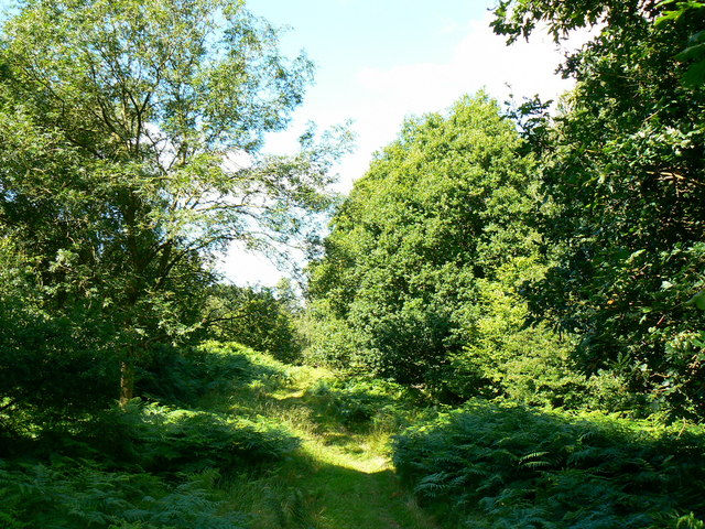 Path west through Bentley Wood