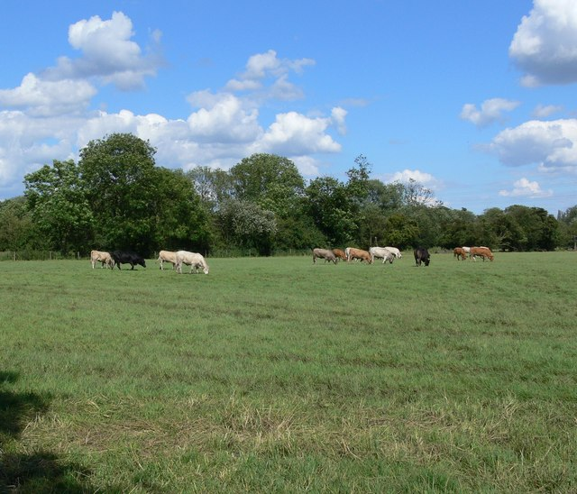Ratby Meadow