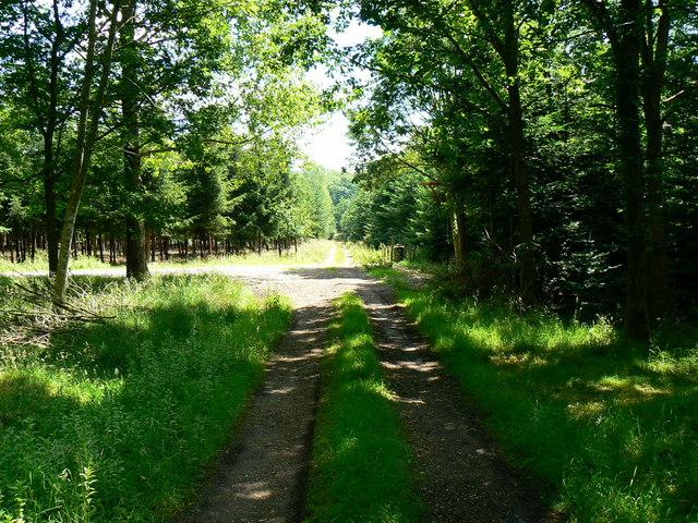 Track east south east through Thorn's Copse, near Newton