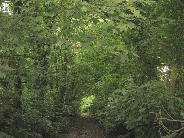 Green canopy - Lon Plas Driveway