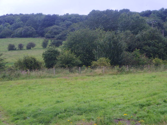 Woods surrounding Saplins Cottage