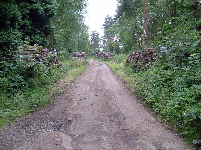 Grafton park wood