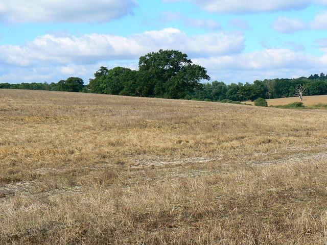 Farmland, Best's Farm, near Farley