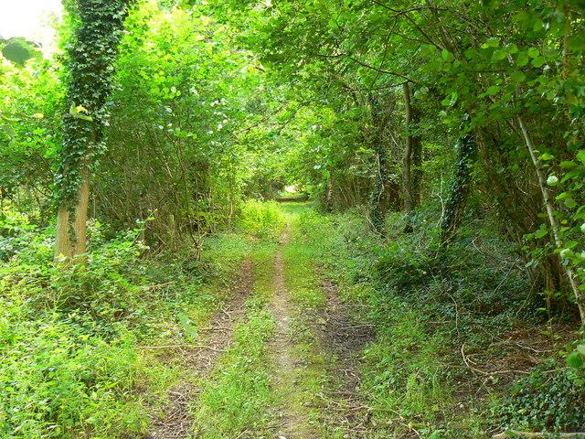 Path near Kings Somborne