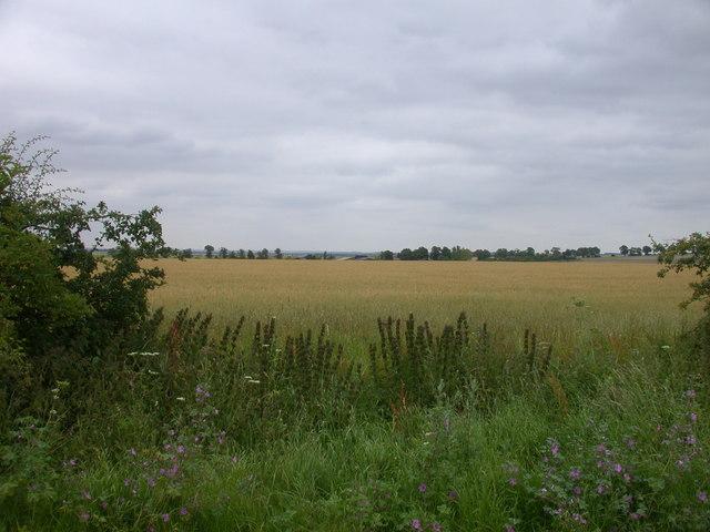 Farmland looking towards Summer House Farm