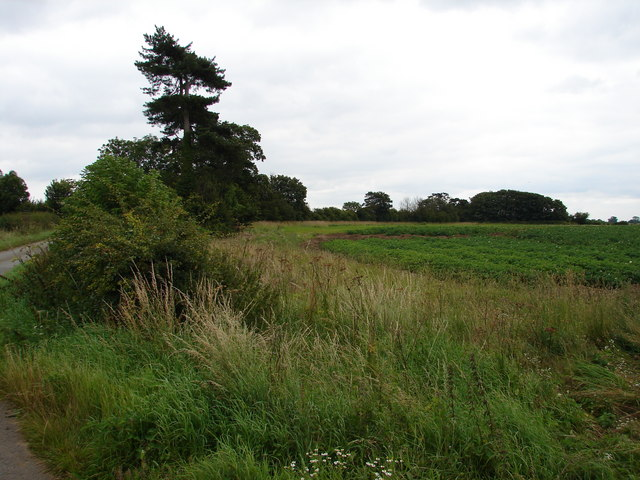 Field and Trees
