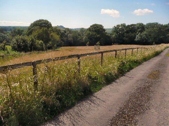 Meadow alongside the road to Lodge Farm