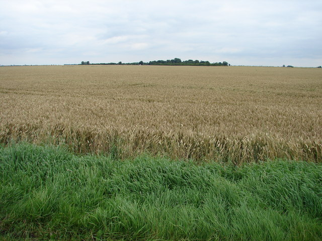 South Kyme Fen from Cow Drove