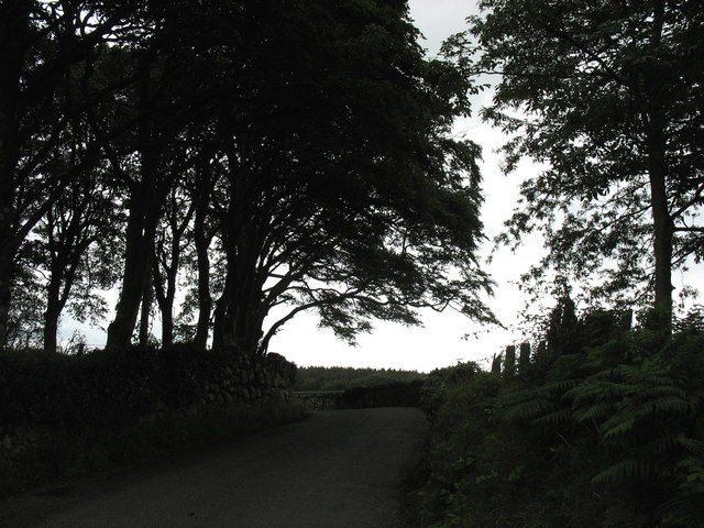 A grove of trees by the roadside