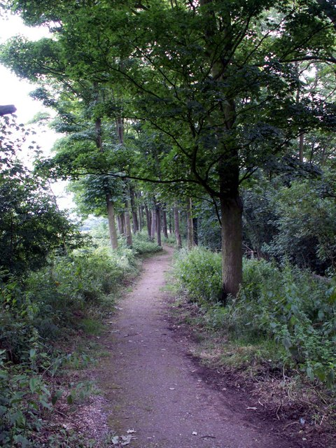 The path to Lady Spencer's Wood