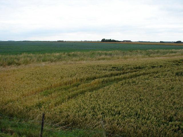 Across the fields towards White House Farm