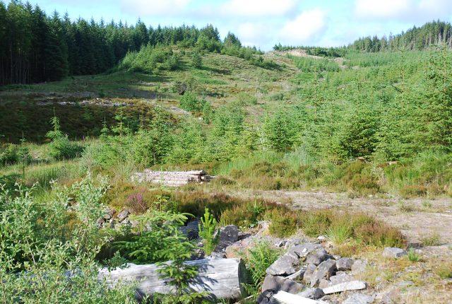 Scruffy forestry