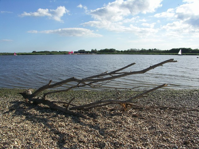 Driftwood on the Stour Estuary