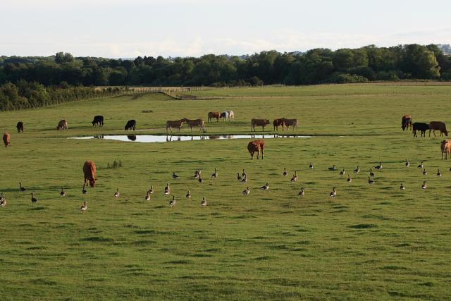 Pasture, Ellerton