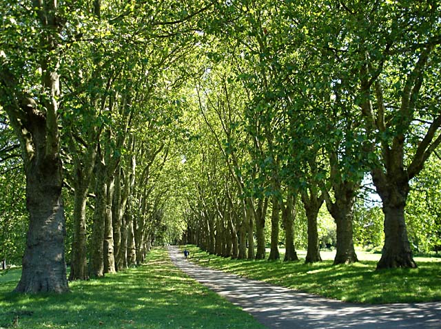 Avenue of trees in St George Park