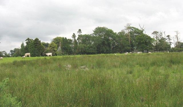 View across a marshy hollow towards Tyddyn-Heilyn Farmhouse