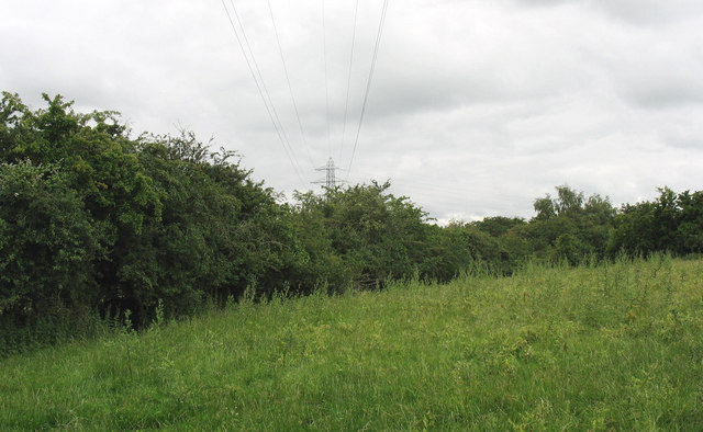 Power lines, hedges and thistle infested field