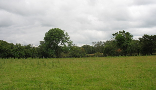 View across the field towards the woodland block