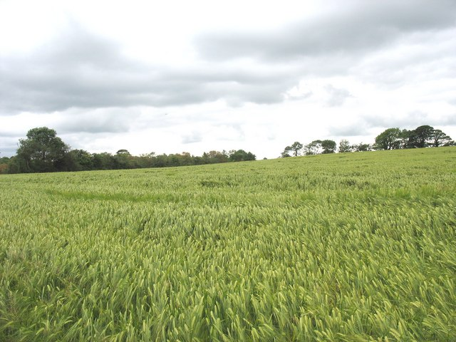 View SW across the barley field