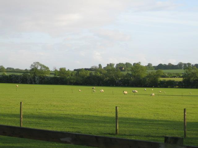 Fields and trees near Steeple Claydon