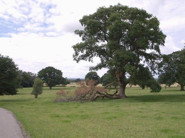 Dillington Park