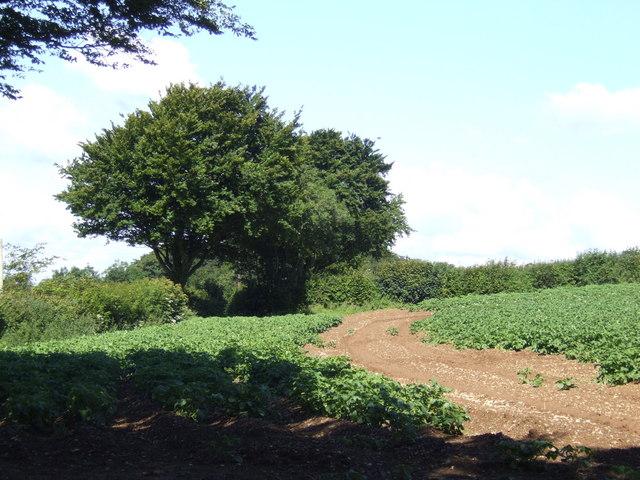 Potato field near Bokenna
