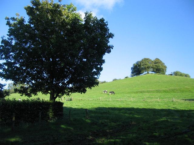 Farmland near Carrot Hill Farm