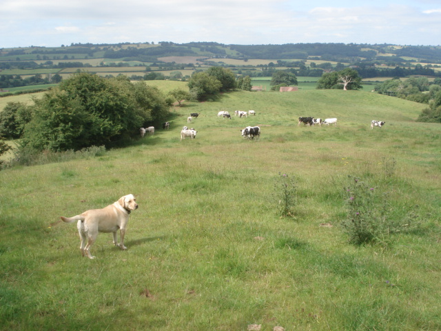 Pasture land on Underley Farm