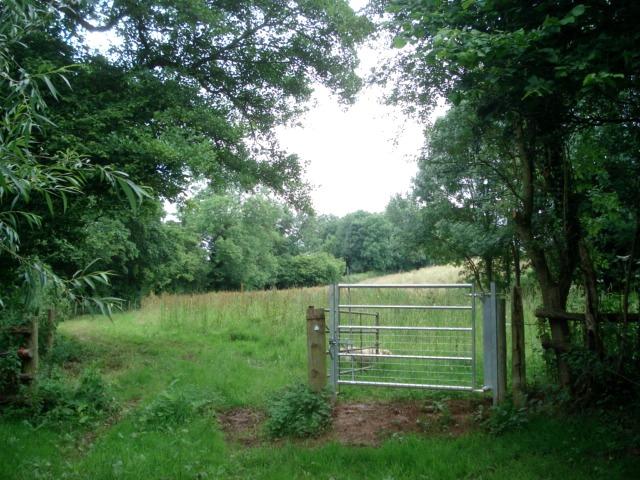 Path following the Collington Brook