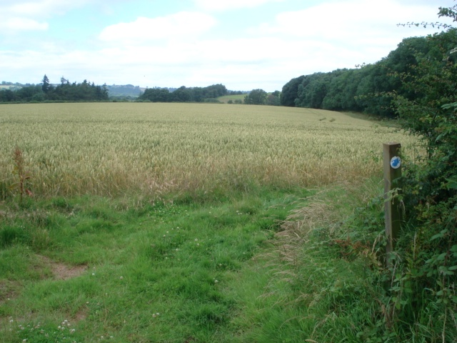 Wheat field near Lower Barn