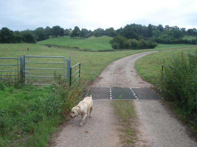 Farm track at Underley Farm