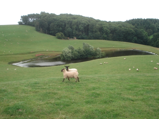 Pond at Cwmwood Farm