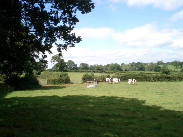 Dairy pasture at Pool House Farm