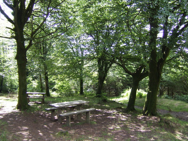 Picnic area in Deerpark Wood