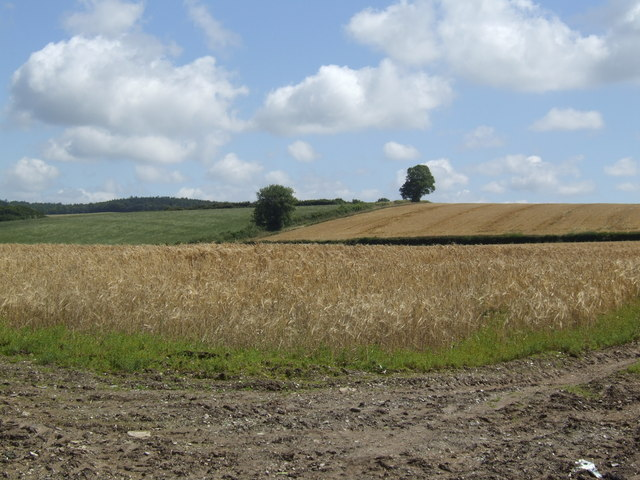 Barley near Polpiece