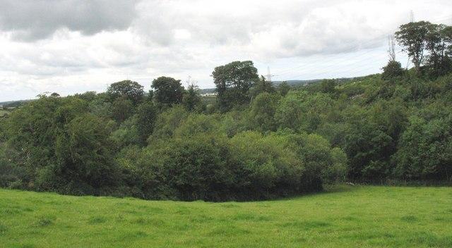 Woodland at Gors y Brithdir