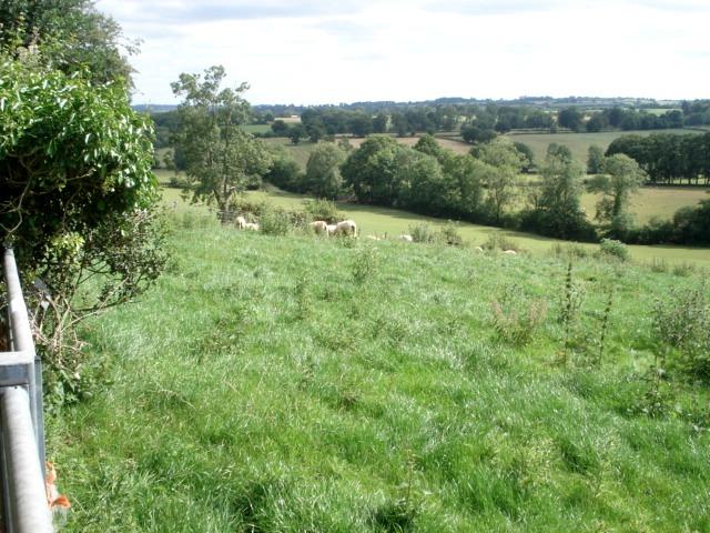 Pasture at Wooding Farm
