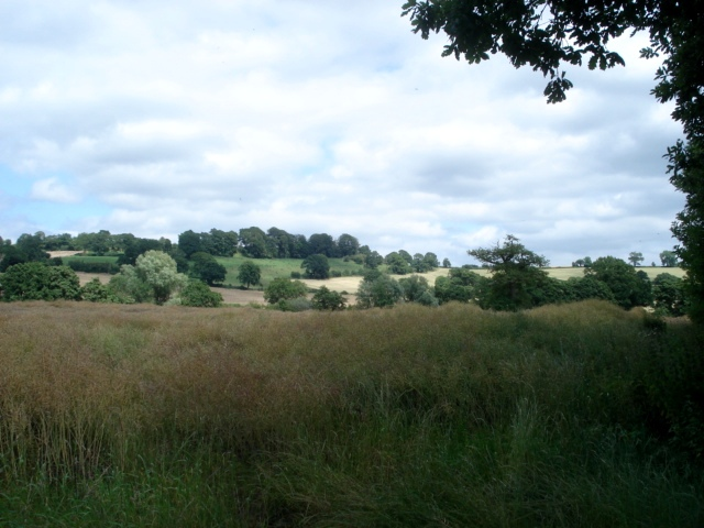 Rape field at Thornbury
