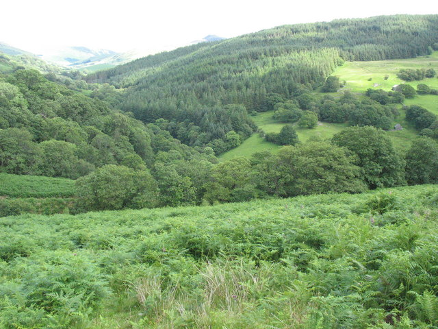 Bracken infested land above the Mawddach Valley