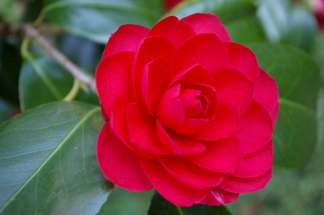 Rose in the garden of Little St Mary's