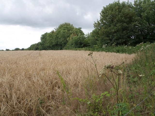 Field beside Wood Close Lane