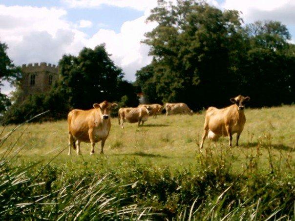 Pastoral Field, Tyringham