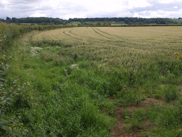Wheatfield by the Fosse Way