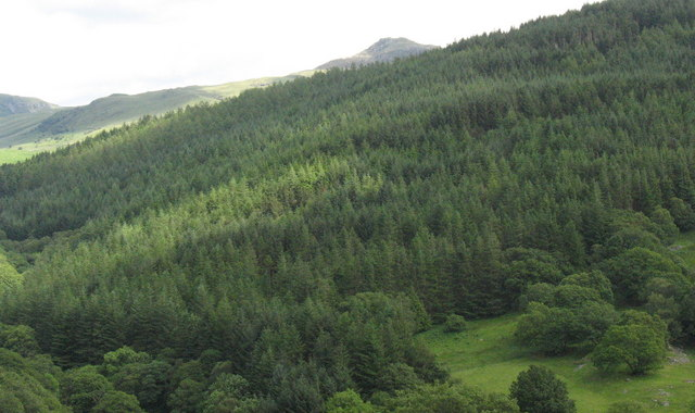 Forest above Tyddyn-mawr with the pyramidical Rhobell-y-big in the background