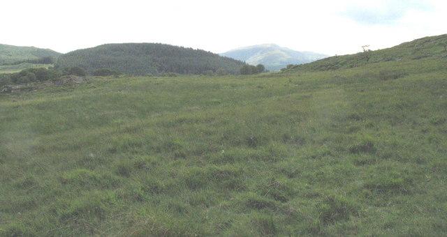 Boggy ffridd grazing land on Bedd y Coedwr Farm